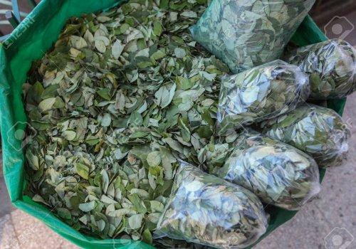 500 Kilos de hoja de coca decomisada en el rió